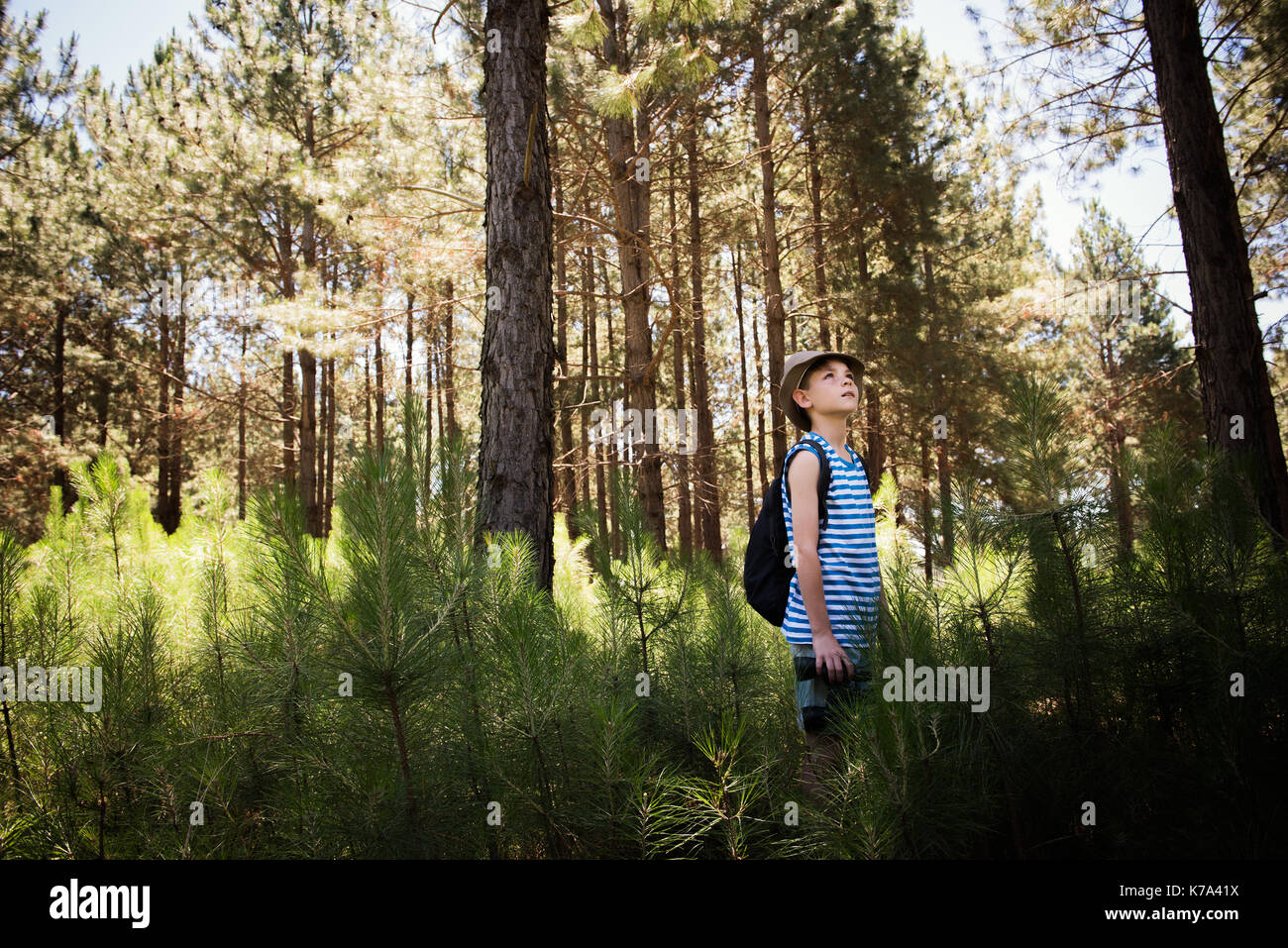 Boy hiking in woods - Stock Image