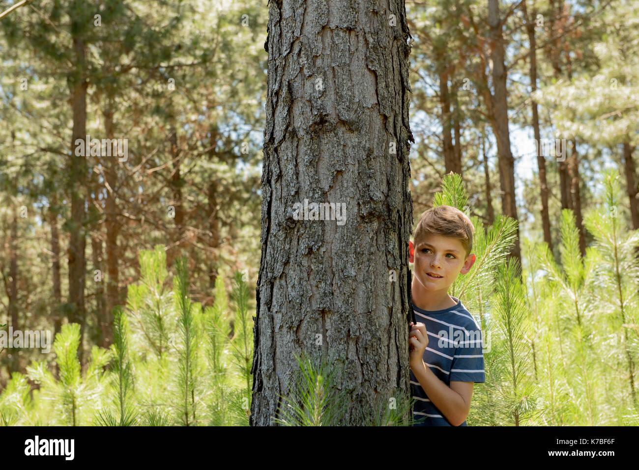Boy hiding behind tree trunk - Stock Image