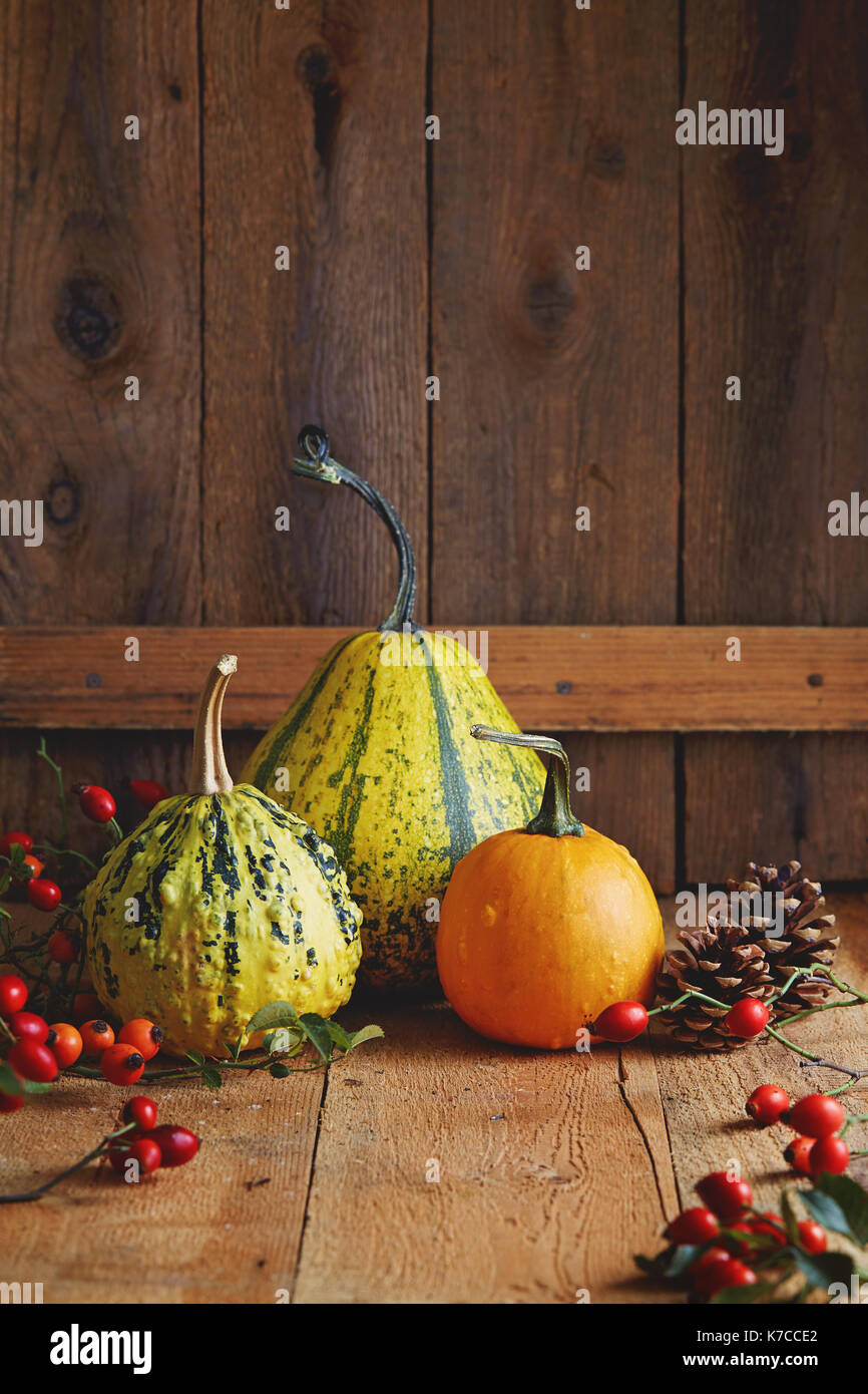 Pumpkin varieties: table and decorative 30