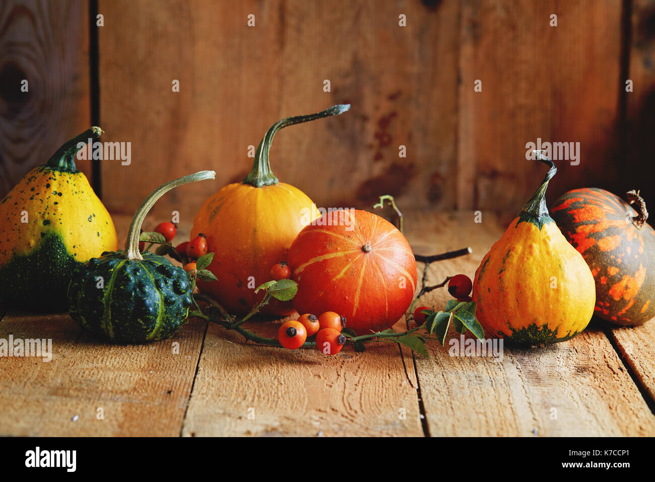 Various types of pumpkin on a wooden table. Autumn arrangement: ornamental gourds with rose hips - Stock Image