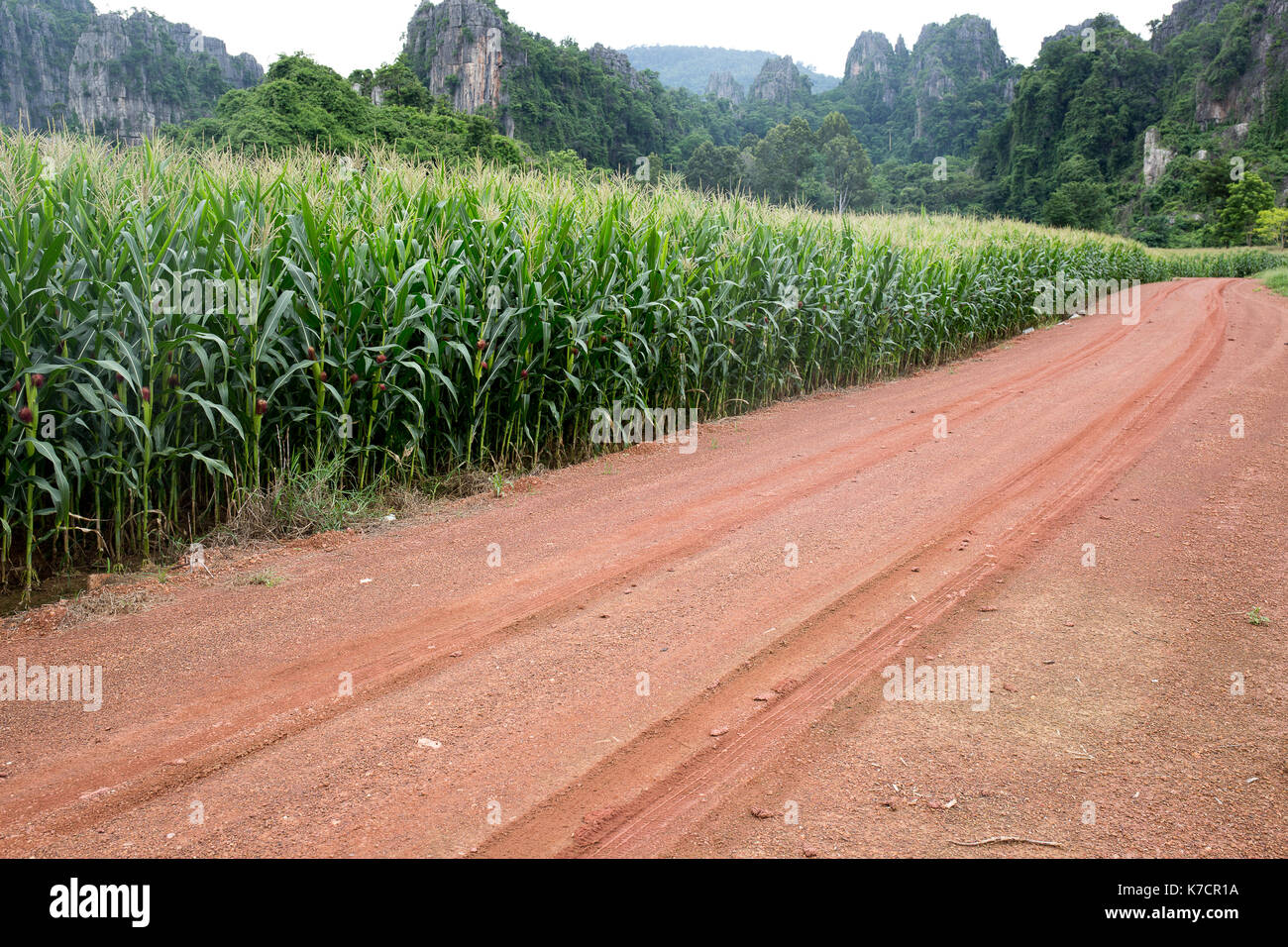 crops grown in laterite soil in india