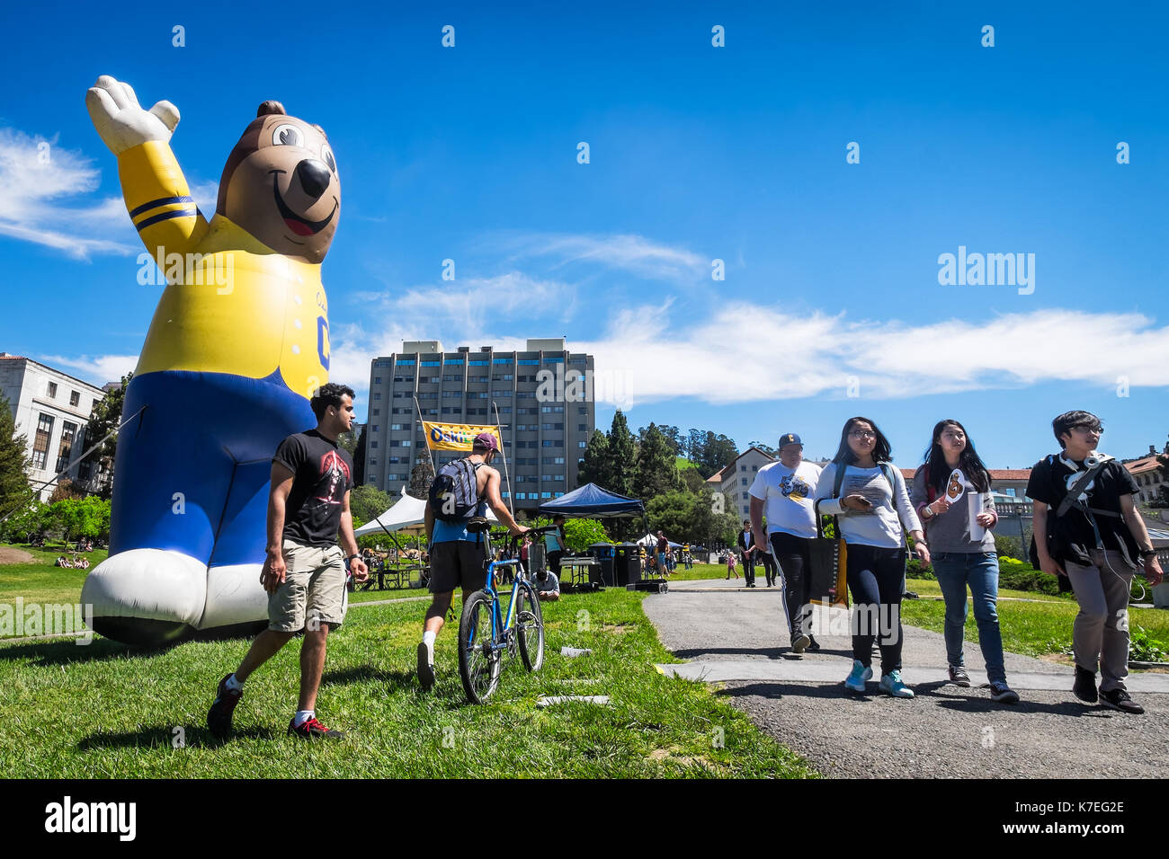 BERKELEY, CA- Apr 16, 2016: University of California Berkeley huge inflatable mascot Oski the Bear greets newly admitted students on Cal Day. - Stock Image