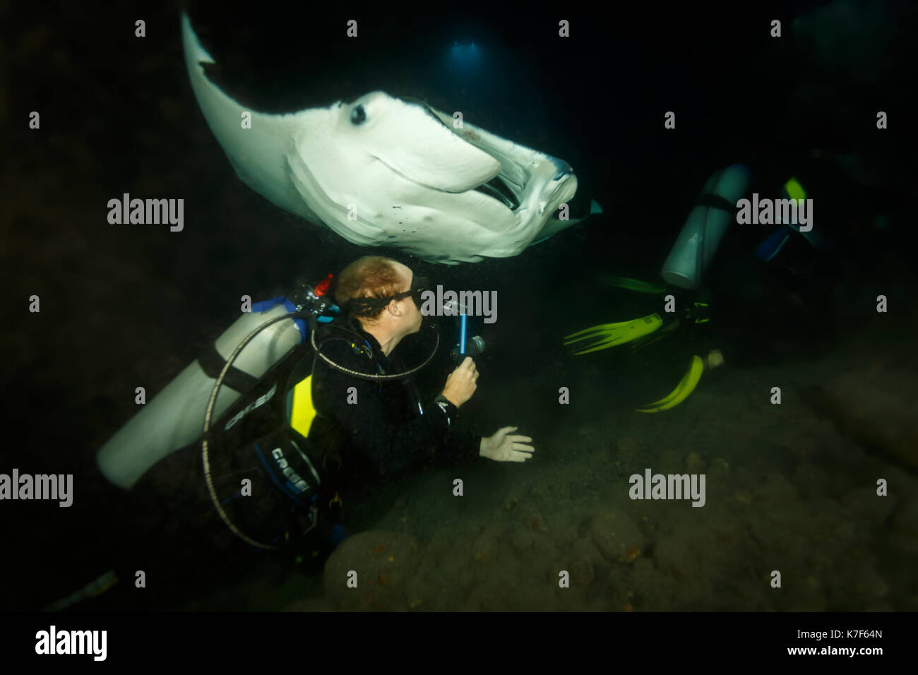 Diver goes in extremely close under the belly of a giant manta ray - Stock Image