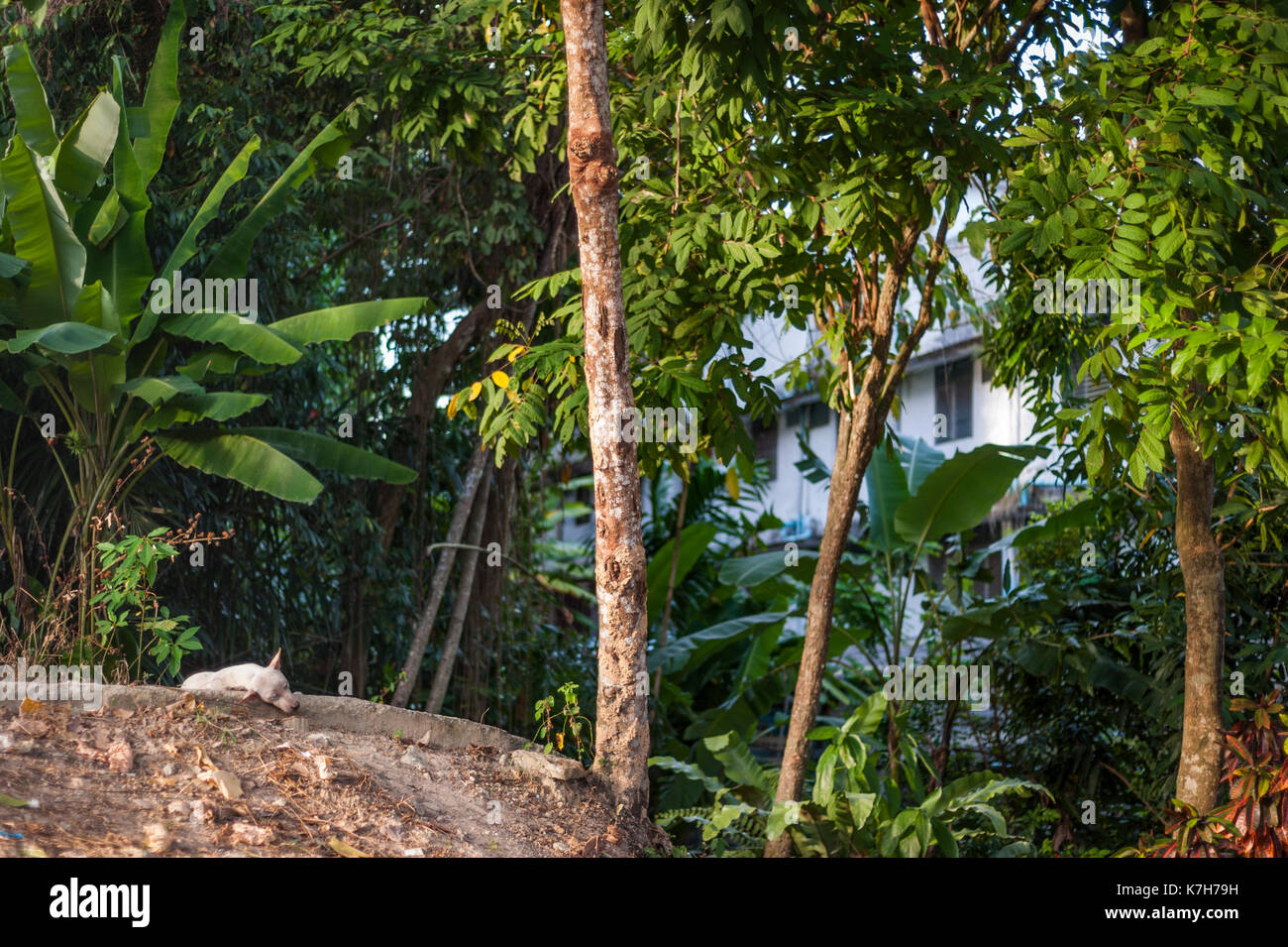 Dog sleeping in Krabi town, Thailand - Stock Image