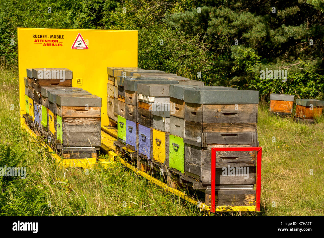 Mobile bee hives, Auvergne, France - Stock Image