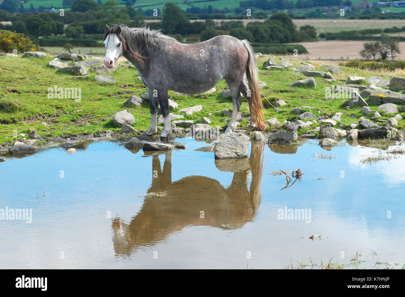 Hergest Ridge, Herefordshire, UK 16th September, 2017. - A beautiful early autumn afternoon with temperatues up to 15c on the 426m high Hergest Ridge - Hergest Ridge straddles the border with Wales and is home to a small herd of wild ponies. Credit: Steven May/Alamy Live News - Stock Image