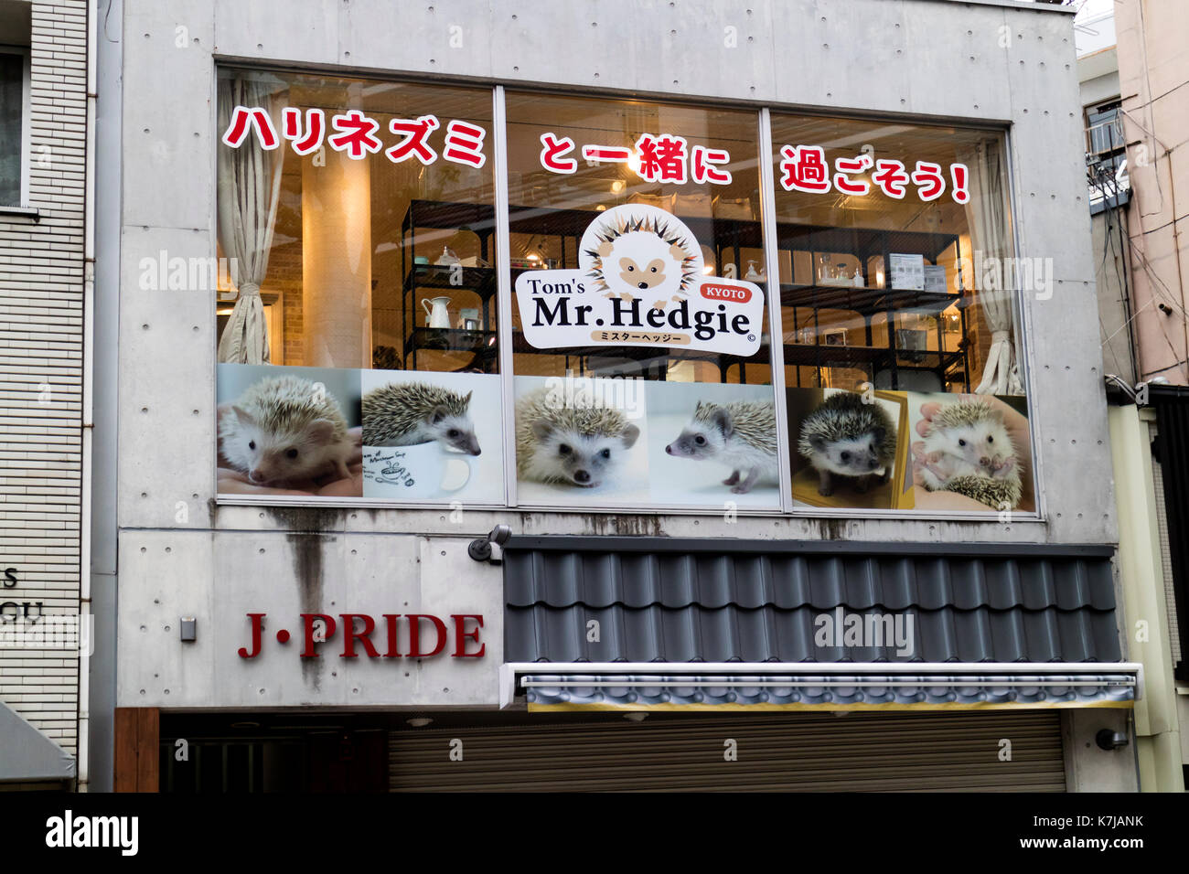Kyoto, Japan -  May 16, 2017: Promotion for a trendy hedgehog-themed cafe called Mr. Hedgie - Stock Image