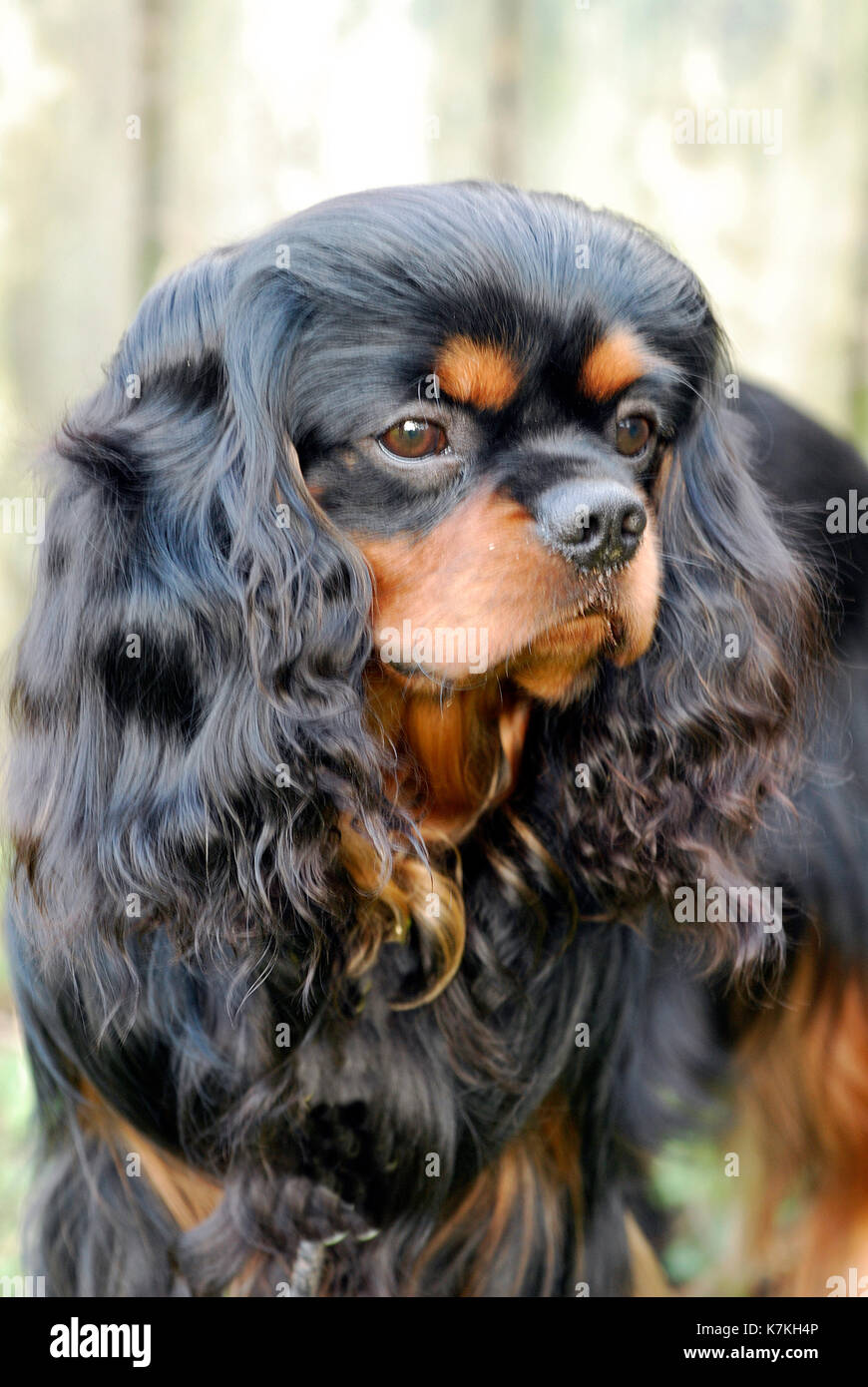 Dog Grooming Stock Photos Dog Grooming Stock Images Alamy