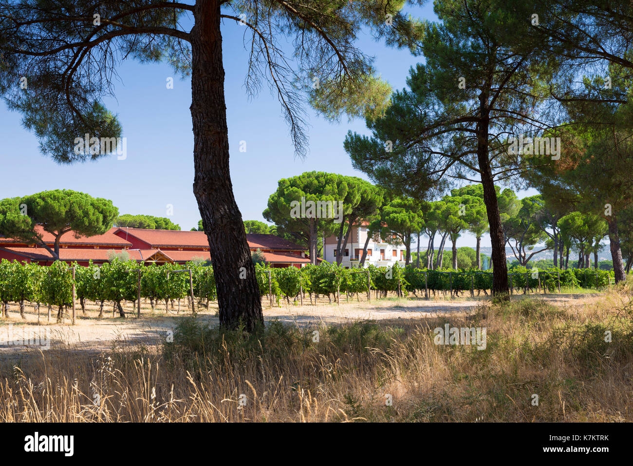 Finca Villacreces, Ribera del Duero wine production bodega by River Duero, Navarro, Spain Stock Photo