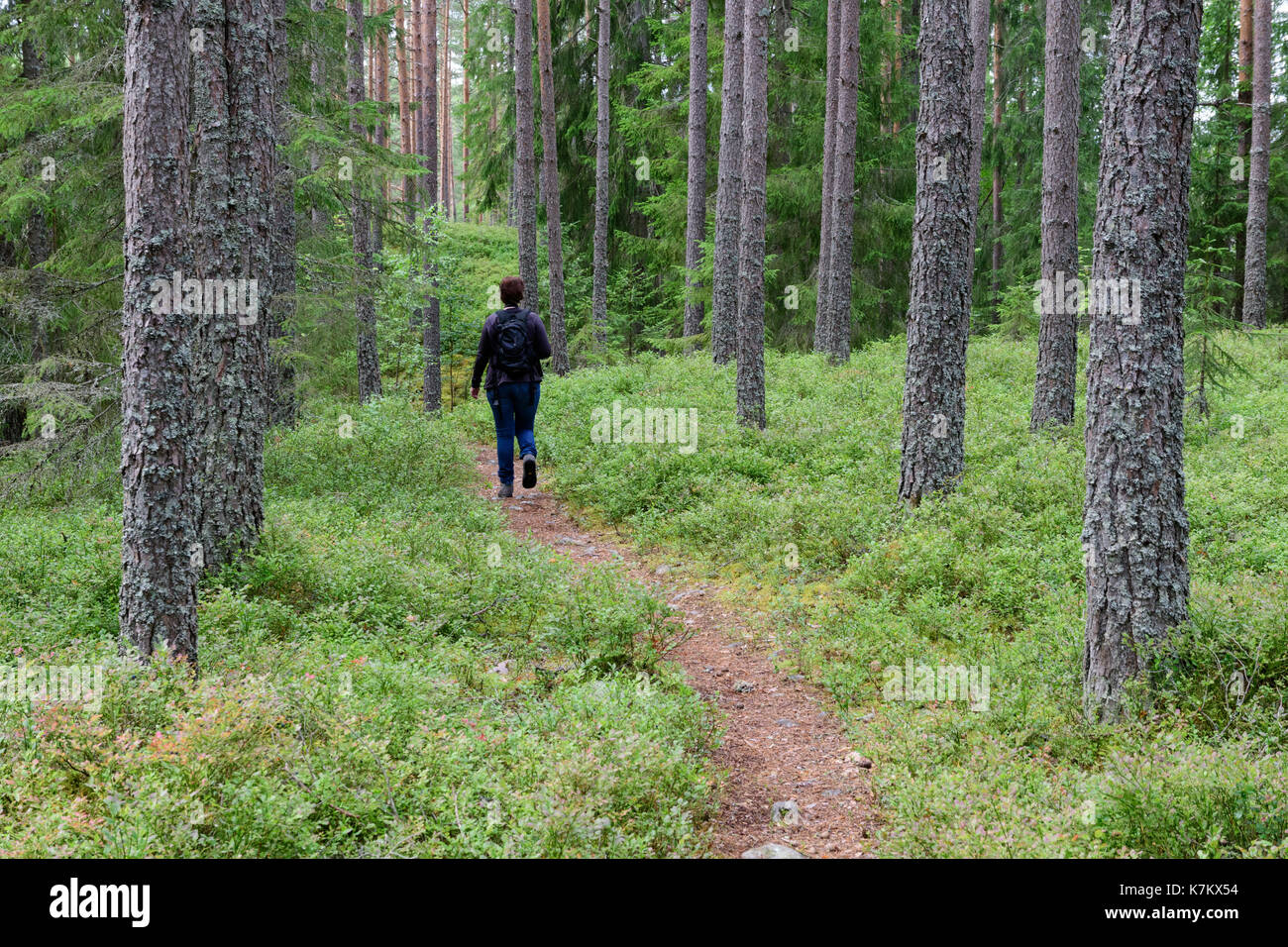 One woman hiking on a forest trail in Sweden - Stock Image