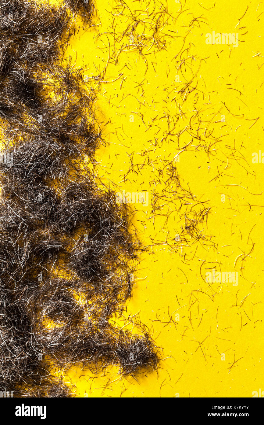 Beard hair clippings on a yellow floor from a barbers or haordressers studio. - Stock Image