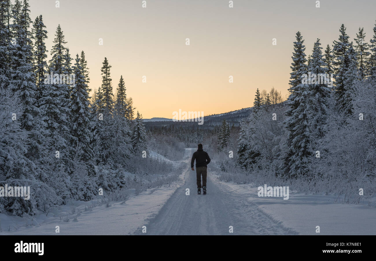 Young man running on skis through snow covered forest into sunset - Stock Image