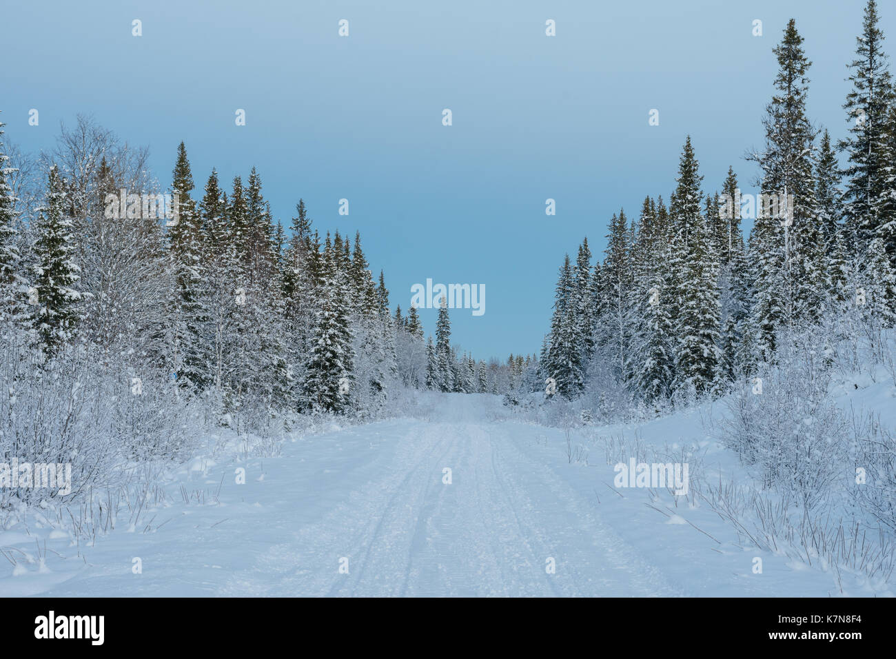 Snow covered road through Swedish winter forest - Stock Image