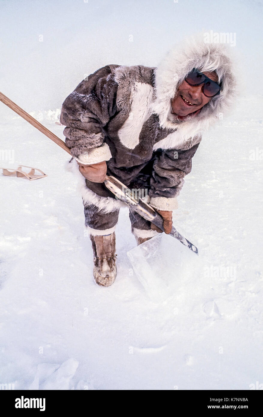 Inuit elder man, mid 60s, dressed in traditional caribou skin clothing, poses with tool he uses to cut ice blocks for building igloos. - Stock Image