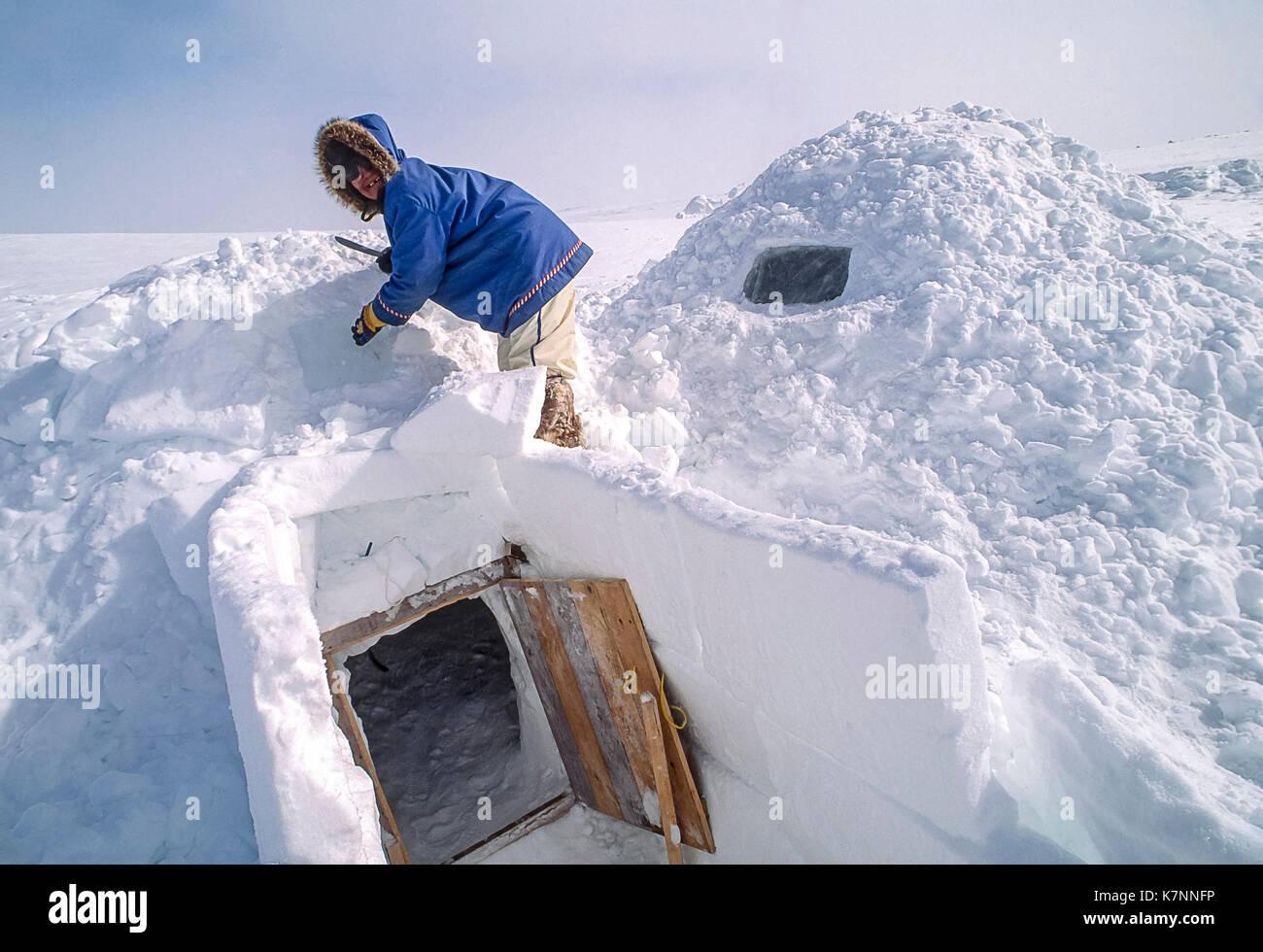Eskimo Building An Igloo Stock Photos & Eskimo Building An
