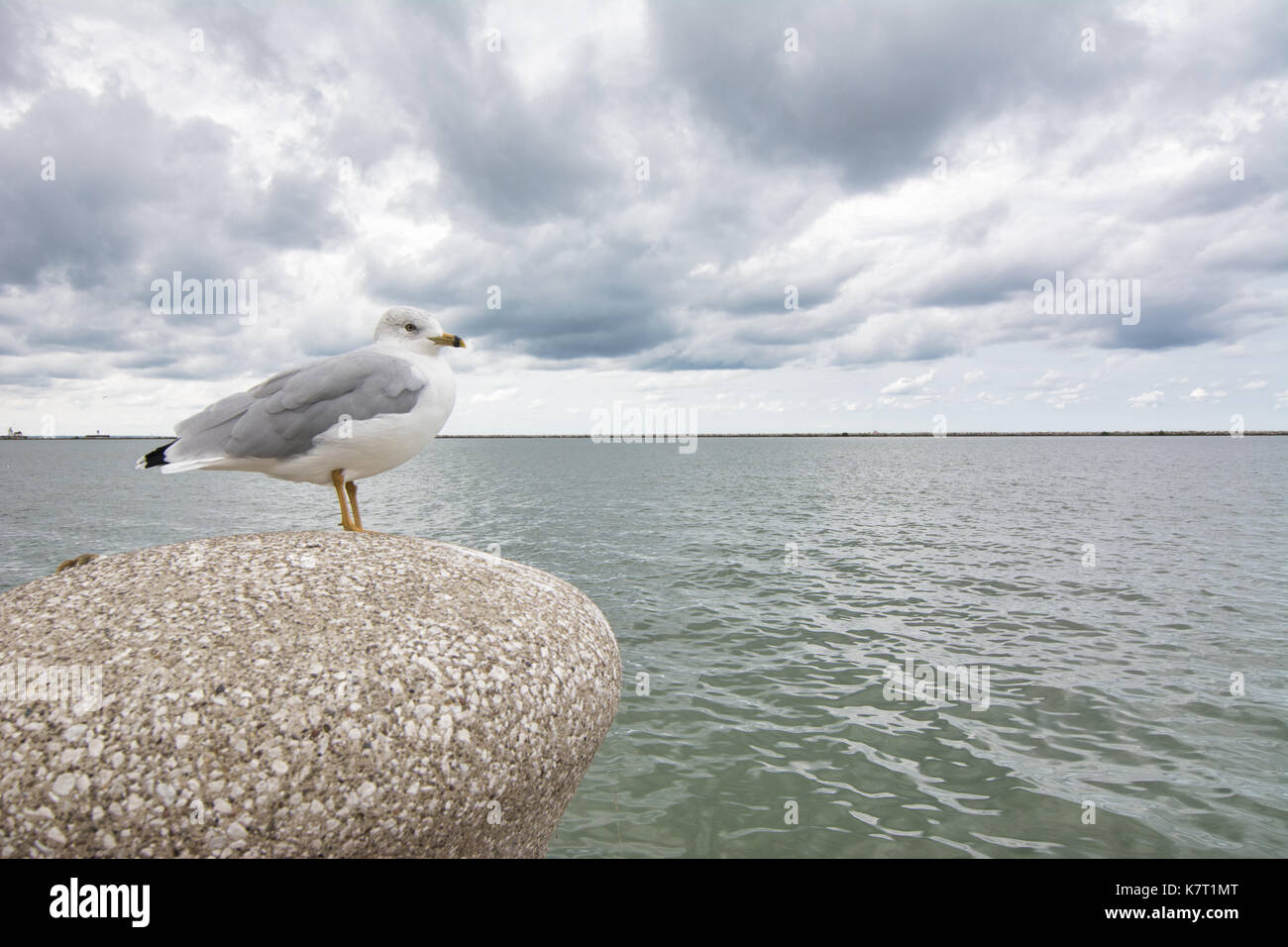 A lone seagull sits on a stone pillar on a cloudy, overcast day along lake Erie in Cleveland, Ohio. - Stock Image