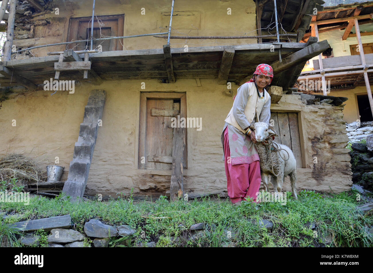 Himachali lady with her sheep standing outside an abandoned house in Shimla, Himachal Pradesh, India. - Stock Image