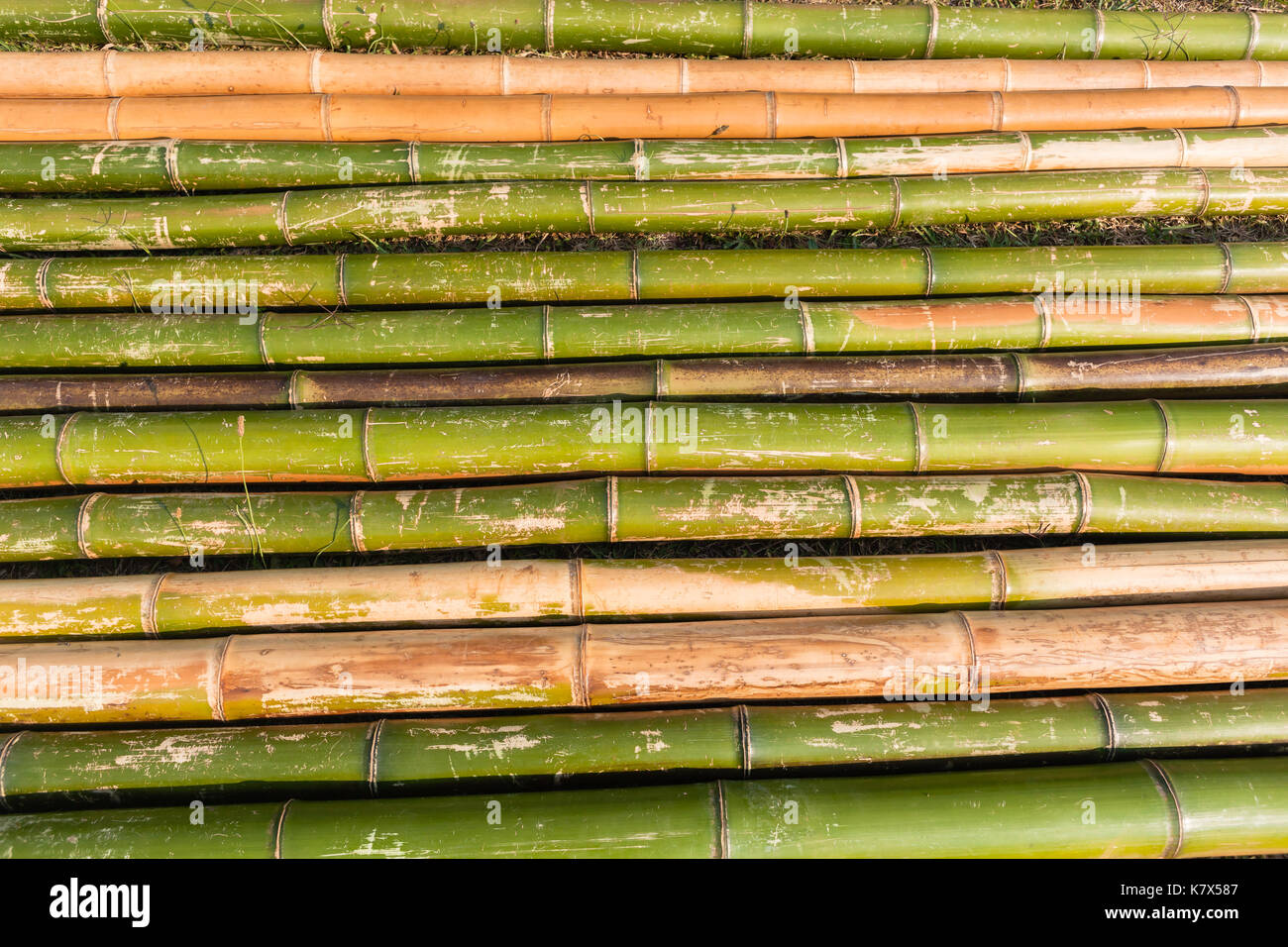 Bamboo poles lengths  closeup stacked together on bround. - Stock Image