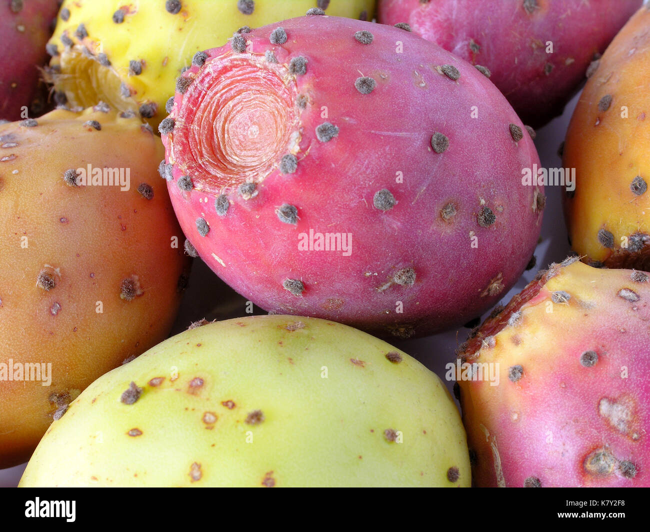 Prickly Pear Fruit - Stock Image