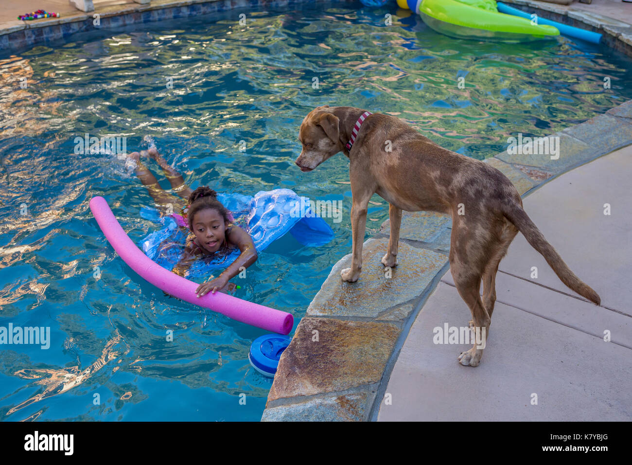 mix-breed dog looking at girl, African-American girl, child, swimmer, girl swimming, swimming, freshwater swimming pool, Castro Valley, California - Stock Image