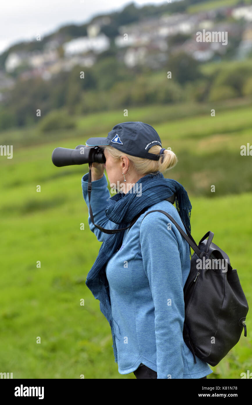 A woman or lady birdwatching at the RSPB nature reserve at Brading marsh on the Isle of Wight using binoculars and reading guidebook.birding twitching - Stock Image