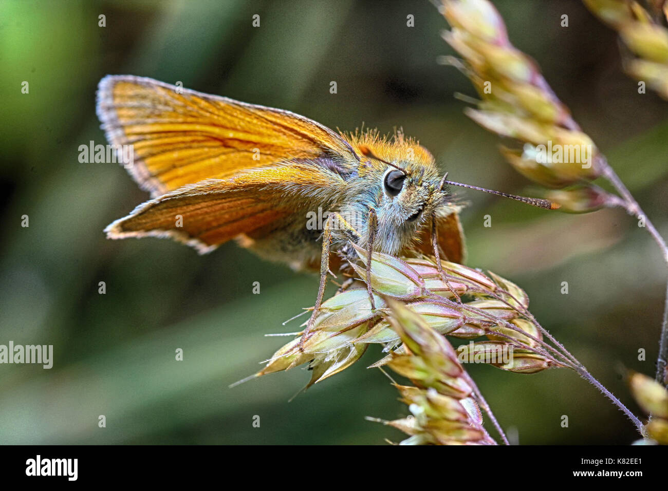 Insekten in Flug, Insects in flight , - Stock Image