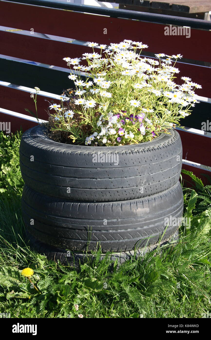 Planter With Daisies. Planter Made From Recycled Old Car Tires. Seen At A  Gas Station In Norway