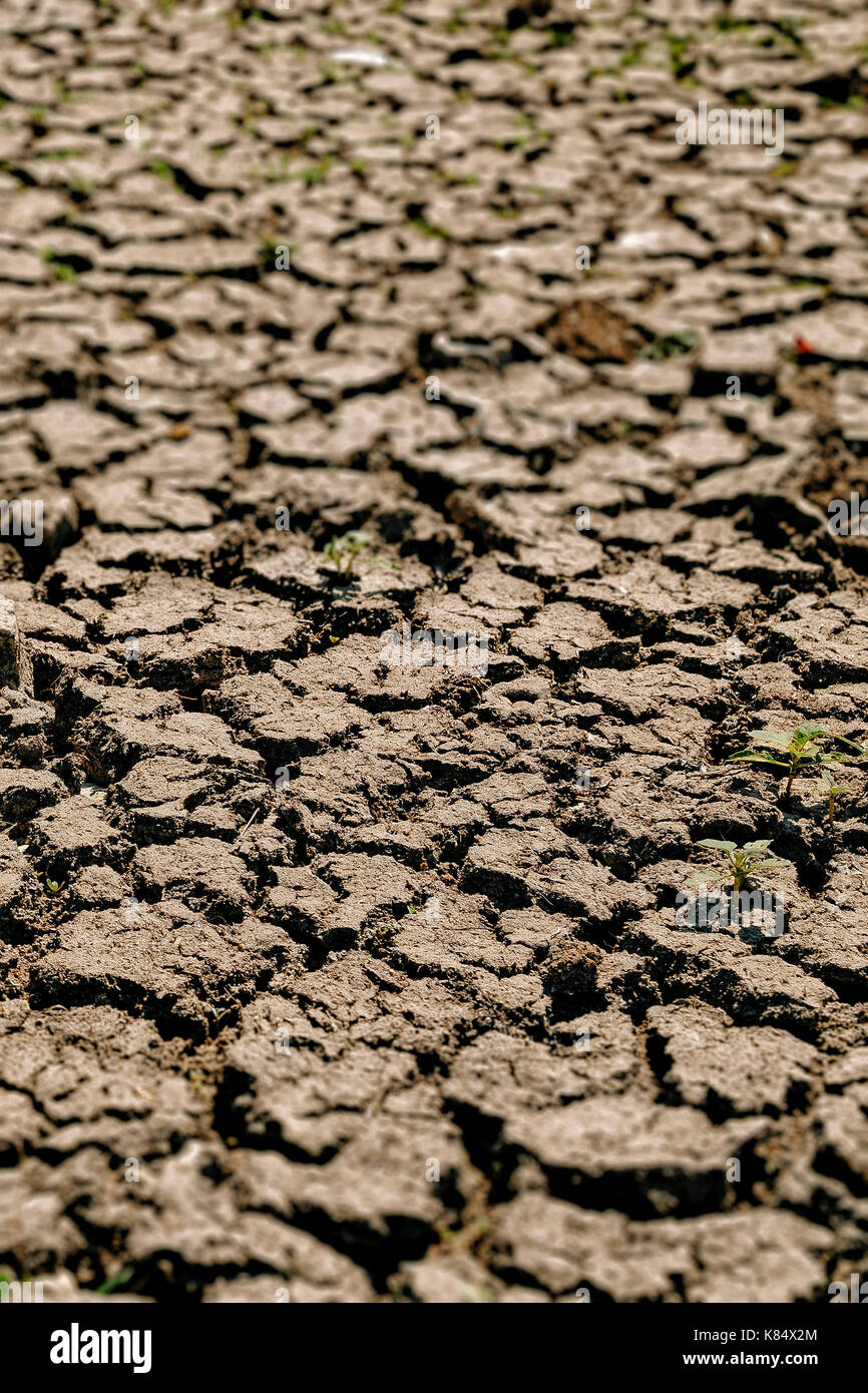 Cracks in drought affected earth - Stock Image