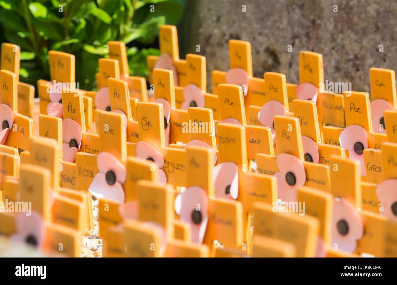 Crosses to represent those who died in war, byt the war memorial in Arundel, West Sussex, England, UK. - Stock Image