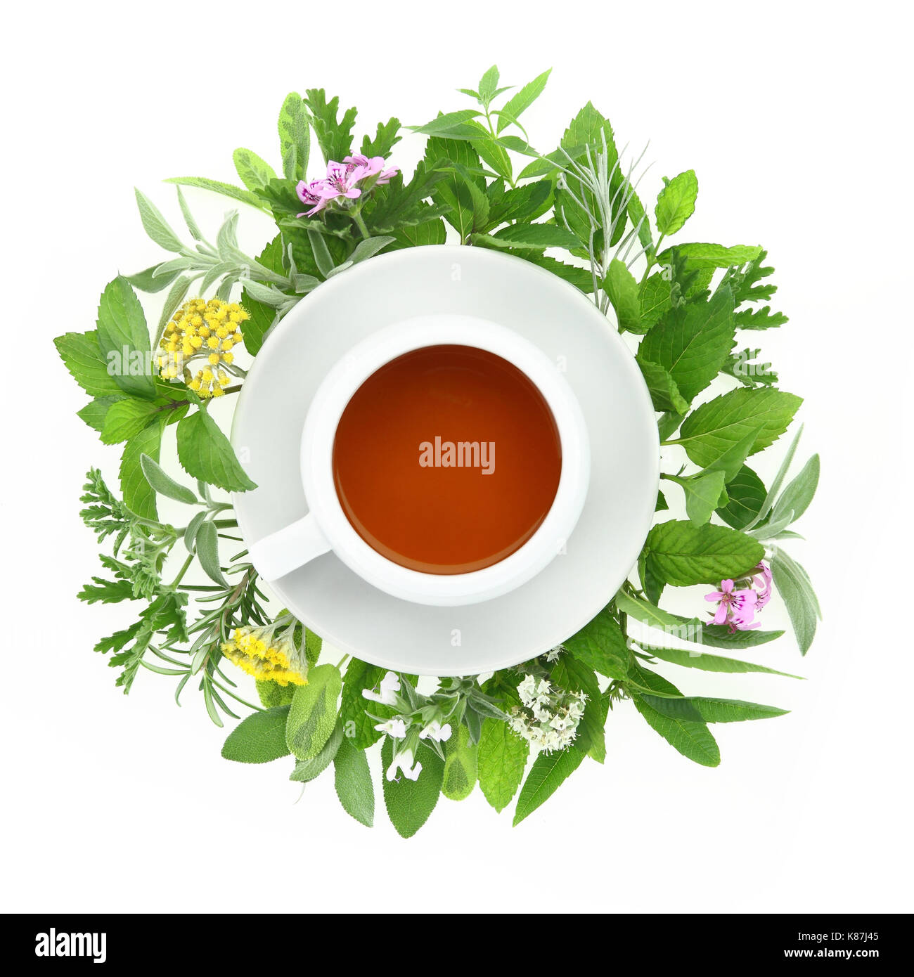Cup of tea with fresh herbs and spices around it - Stock Image