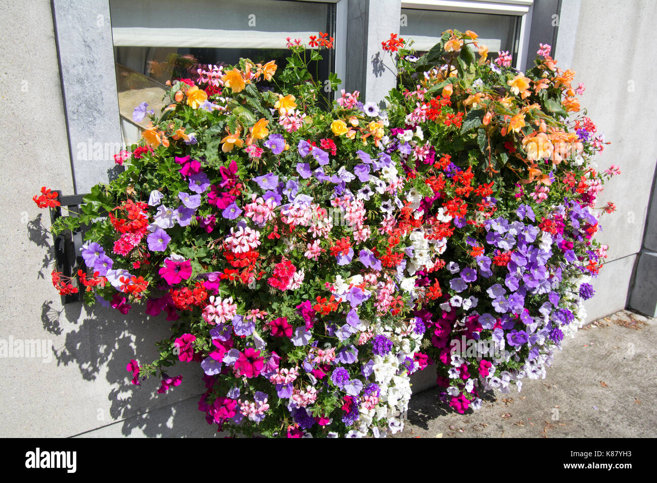 A very good display of flowers in a window box - Stock Image