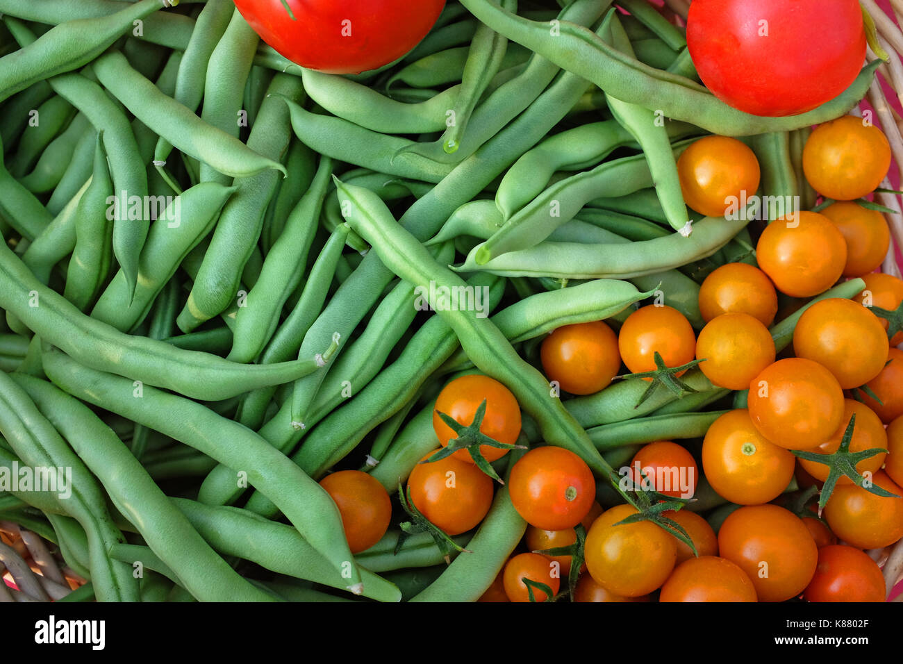 Fresh organic sungold tomatoes, early girl tomatoes, and blue lake pole beans, from a home garden in central oregon. - Stock Image