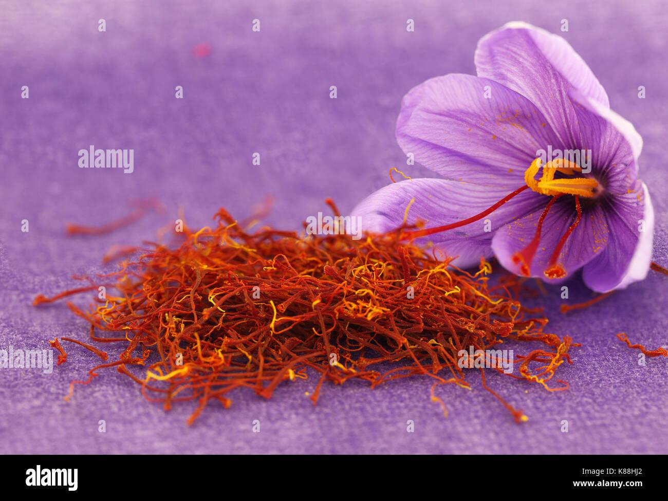 Dried saffron spice and Saffron flower - Stock Image