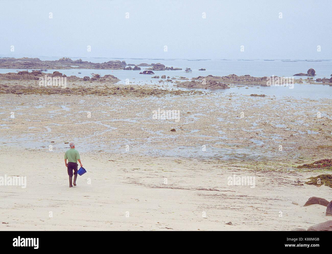 Shellfish catcher walking along the beach in low tide. Carreiron Nature Reserve, Arosa Island, Pontevedra province, - Stock Image