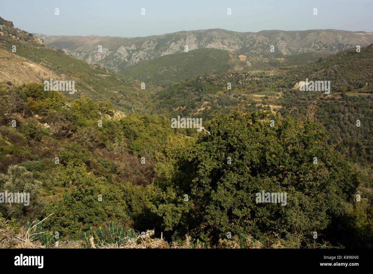 Mediterranean forest near Apostoli in the mountains of central Crete.   Laubwald in der Nähe von Apostolis - Stock Image