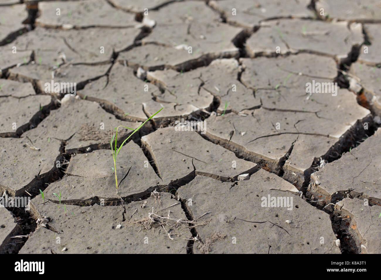 Broken soil - Stock Image