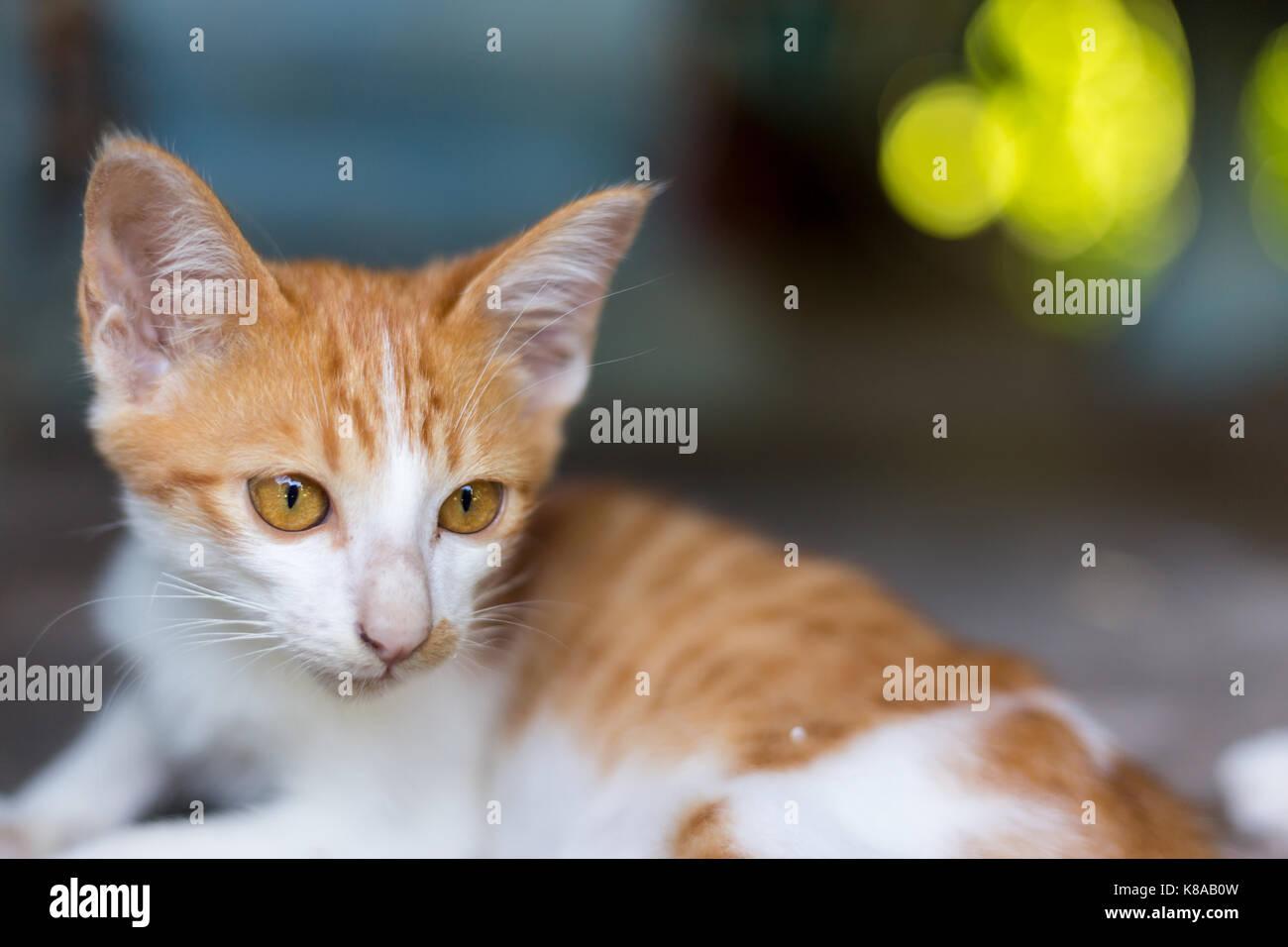 Cat. - Stock Image