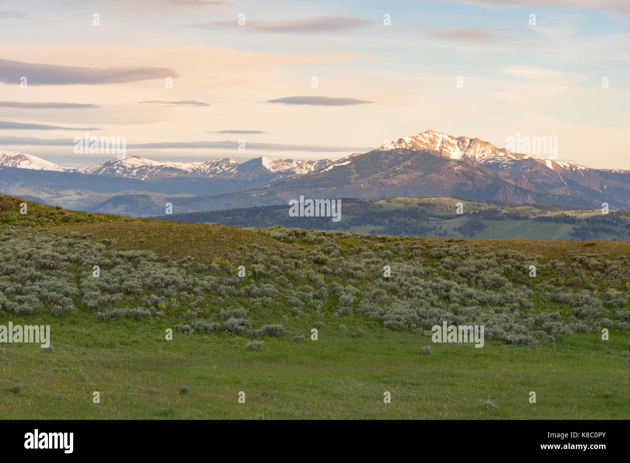 Blacktail Plateau with a view of snow capped mountains in the distance and a grassy green meadow with sagebrush - Stock Image