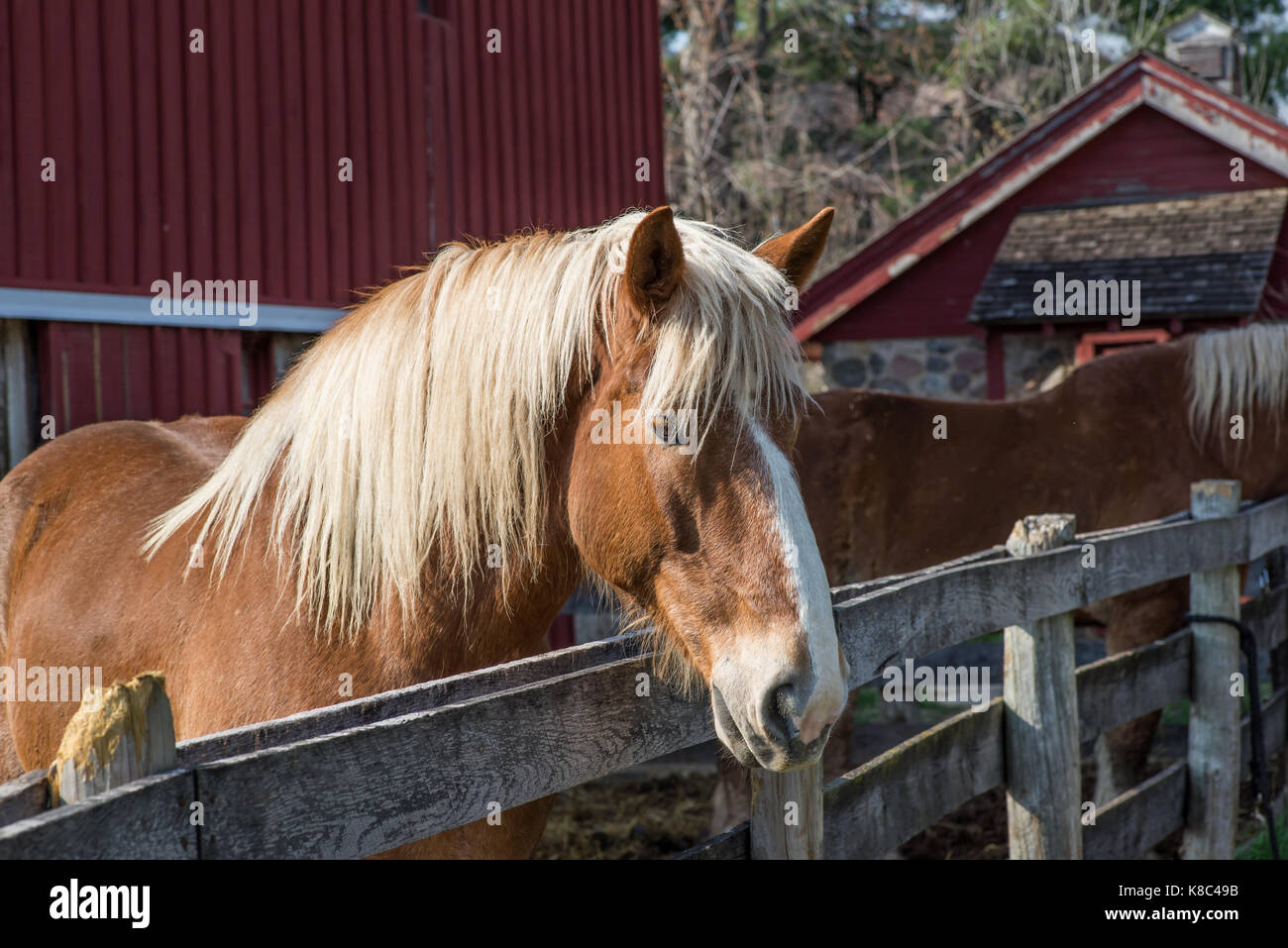 Portrait of a brown horse - Stock Image