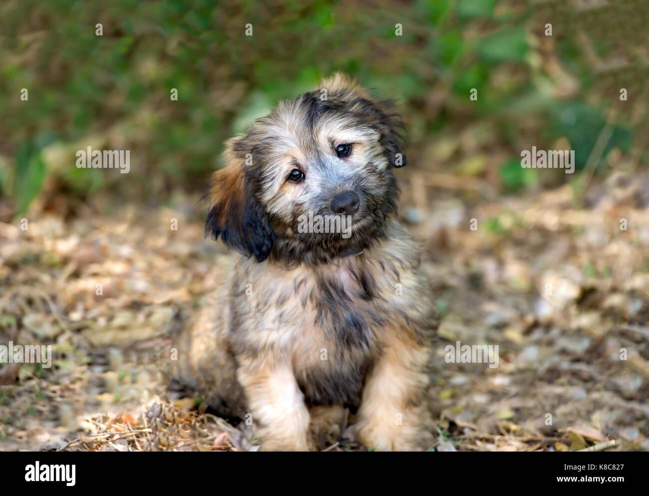 Puppy Dog Eyes Stock Photos Puppy Dog Eyes Stock Images Alamy