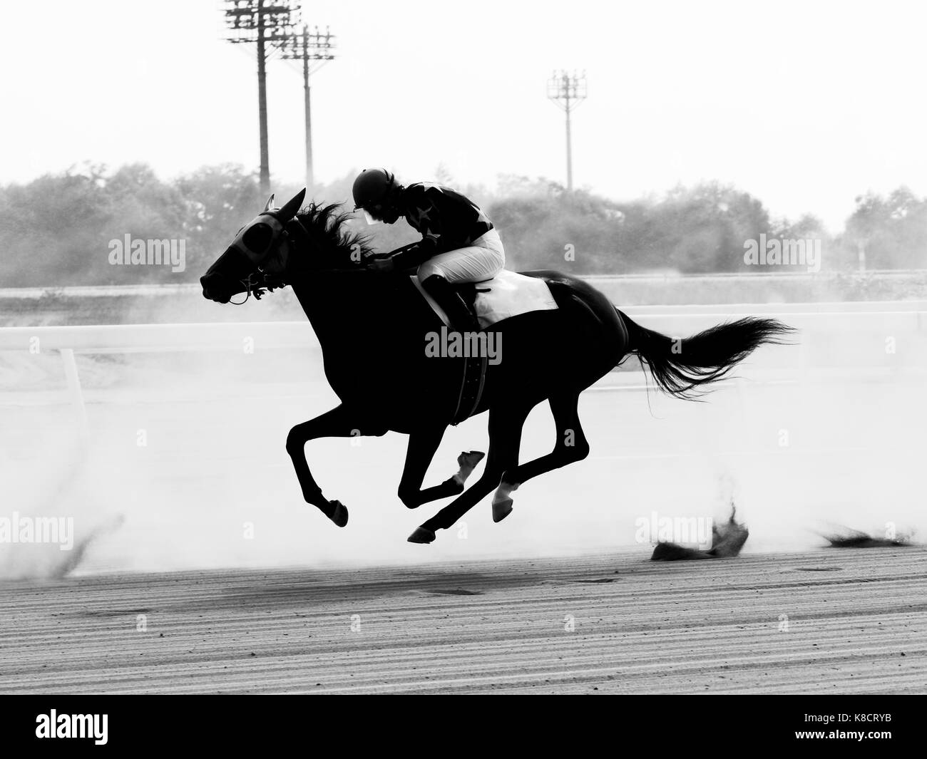 Thoroughbred Horse - Stock Image