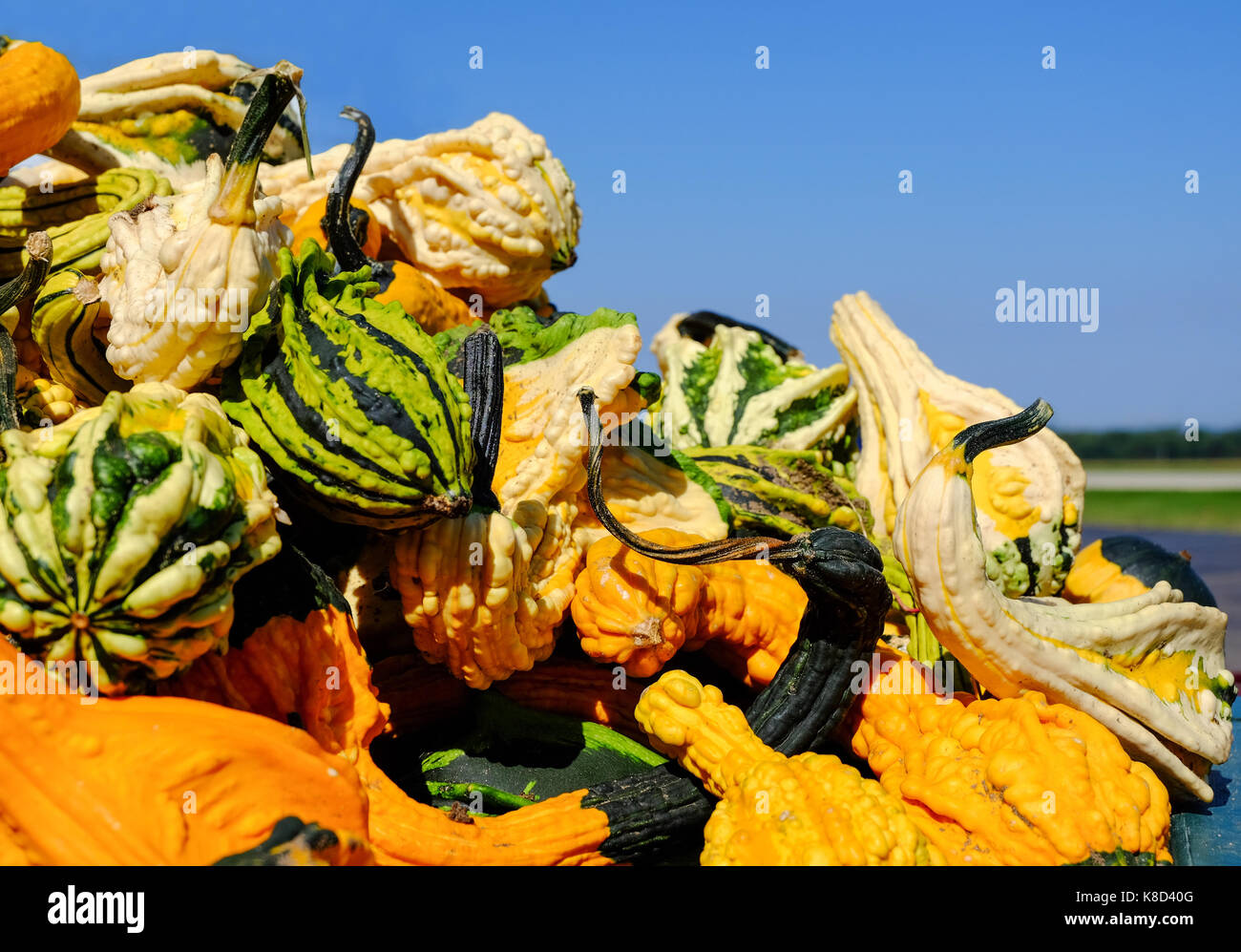 Pile of Pumpkins with Warts at a fresh market. Copy space. - Stock Image