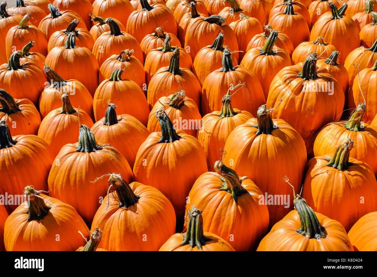 Pile of pumpkin at a fresh market - Stock Image