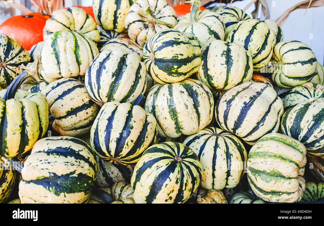 Colorful Squash in a container at fresh market - Stock Image