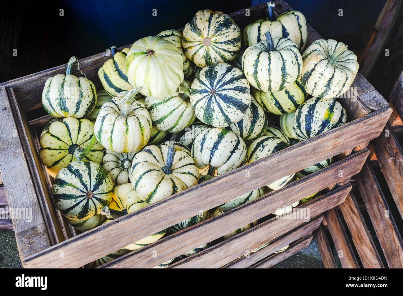 Colorful Squash in a container at fresh market Stock Photo