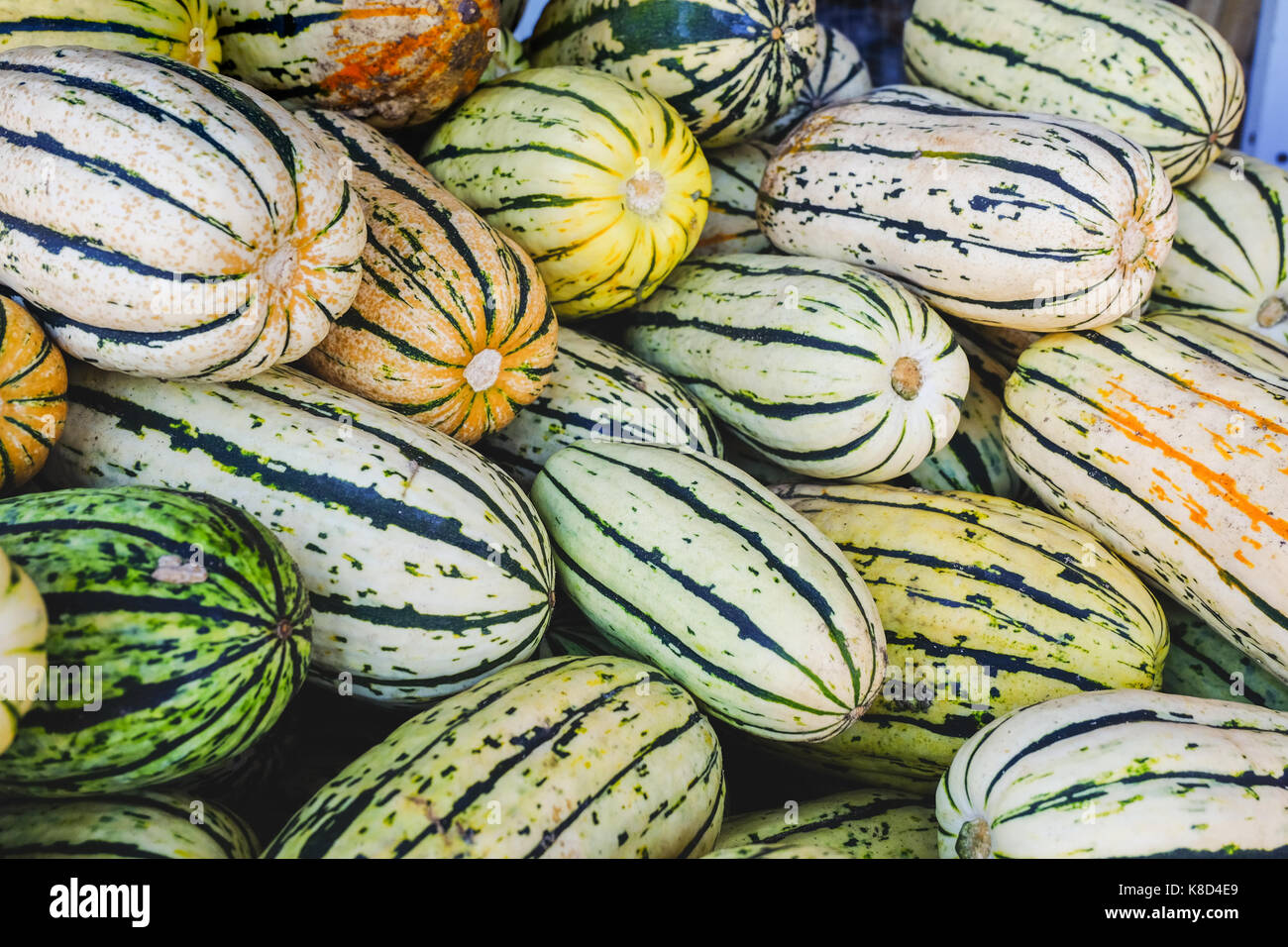 Potato Sweet Squash in a container at fresh market - Stock Image
