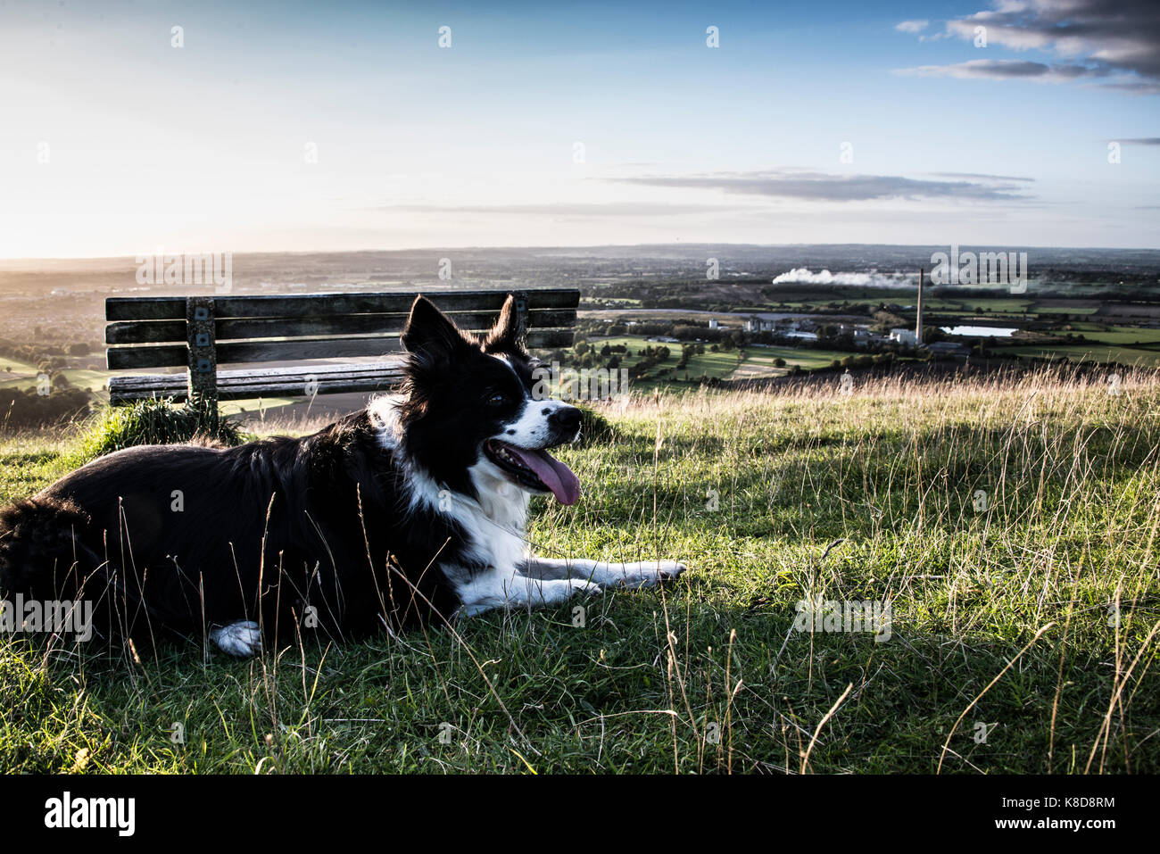 A border collie sat by a bench Stock Photo