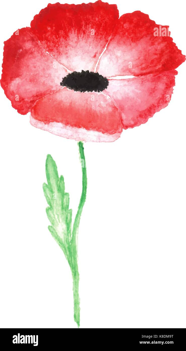water color red poppy isolated on white background - Stock Vector