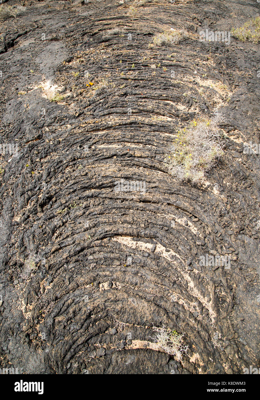 Solidified pahoehoe or ropey lava field, Tahiche, Lanzarote, Canary Islands, Spain - Stock Image