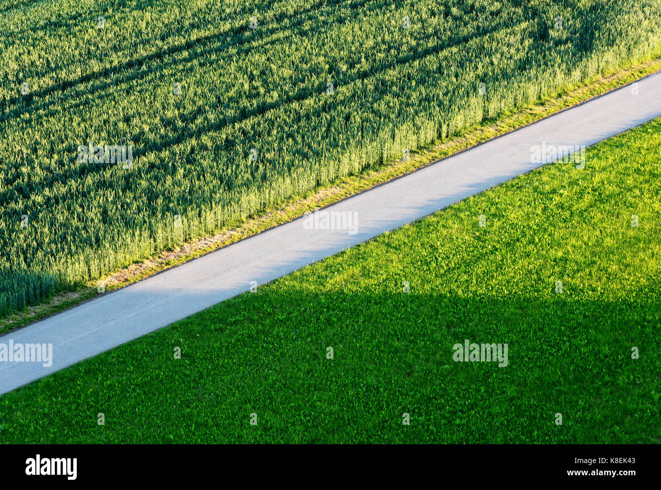 Road through green agricultural fields - Stock Image